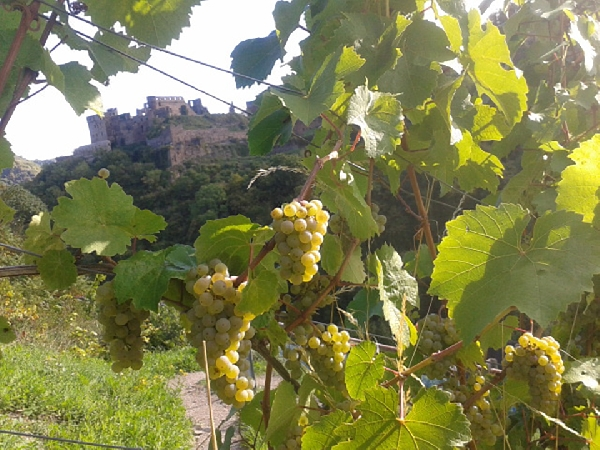 vineyards-and-castle-rheinfels web